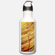 LM: synapses between m Water Bottle