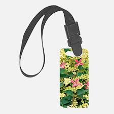 Clematis texensis 'Princess Dian Luggage Tag