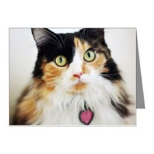 Close-up of long haired cali Note Cards (Pk of 20)