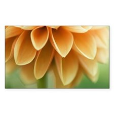 Closeup of orange Dalia flower Decal