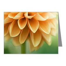 Closeup of orange Dalia flow Note Cards (Pk of 20)