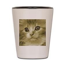 Huge Kitten Face Shot Glass
