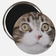 Huge Kitty Face Magnet