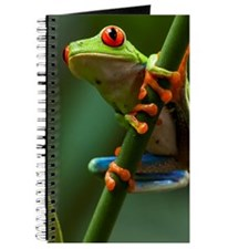 Costa Rica, Monteverde, Red-Eyed Tree Frog Journal