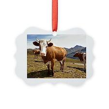 Cows on hilltop, austria Picture Ornament