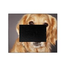 Dog, close-up Picture Frame