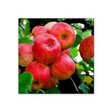 """Red Apples on Tree Square Sticker 3"""" x 3"""""""