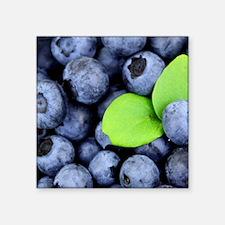 "Blueberries Square Sticker 3"" x 3"""