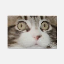 Wide-Eye Kitten Face Rectangle Magnet