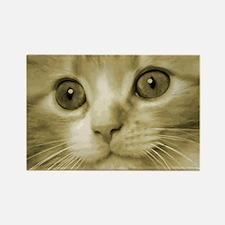 Pretty Kitten Face Rectangle Magnet