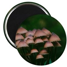 Bleeding mycena mushrooms Magnet