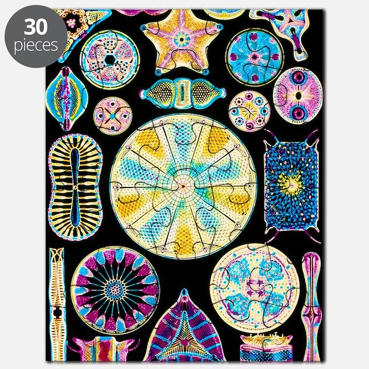 Art of Diatom algae (from Ernst Haeckel) Puzzle