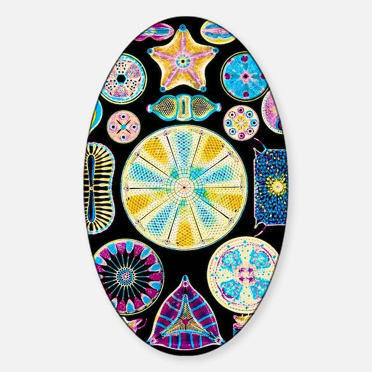 Art of Diatom algae (from Ernst Hae Decal