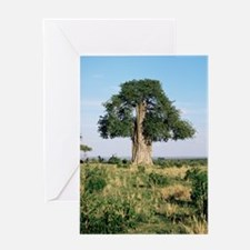 Baobab tree (Adansonia digitata) Greeting Card
