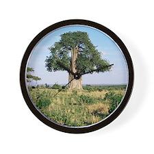 Baobab tree (Adansonia digitata) Wall Clock