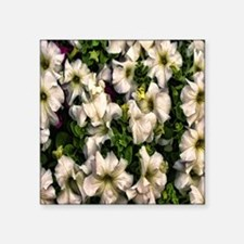 "amaryllis Square Sticker 3"" x 3"""