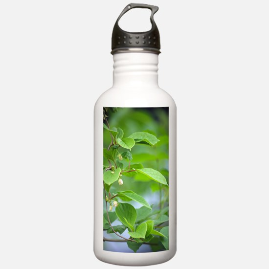 Chinese schisandra (Sc Sports Water Bottle