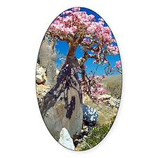 Desert rose tree Decal