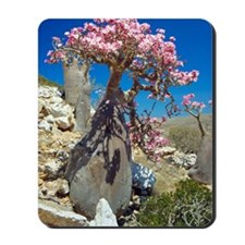 Desert rose tree Mousepad