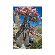 Desert rose tree Rectangle Magnet