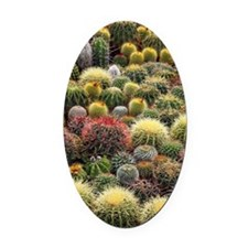 Cacti Oval Car Magnet