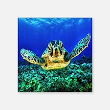 """aquatic sea turtle Square Sticker 3"""" x 3"""""""