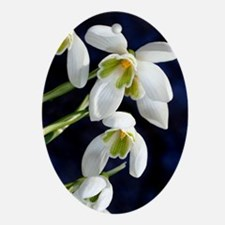 Common snowdrop (Galanthus nivalis) Oval Ornament