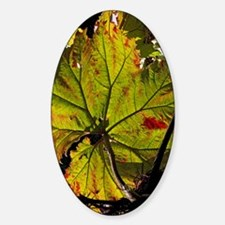 Giant rhubarb leaf Decal