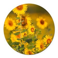 Fields of sunflowers in the early Round Car Magnet