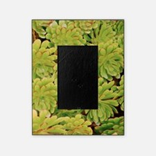 Fisiulera plants Picture Frame