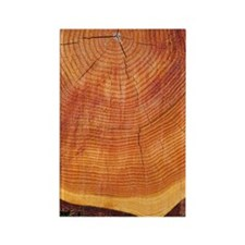 Growth rings of a scots pine tree Rectangle Magnet