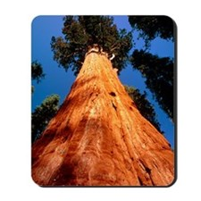 Giant Sequoia 'General Sherman' Mousepad
