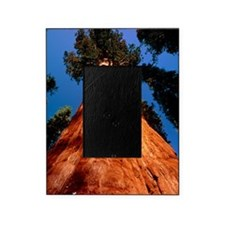 Giant Sequoia 'General Sherman' Picture Frame