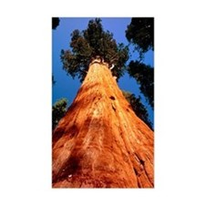 Giant Sequoia 'General Sherman Decal
