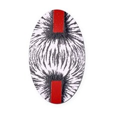 Magnetic attraction Oval Car Magnet