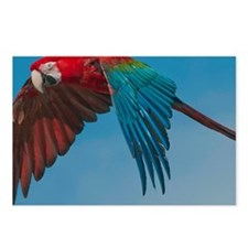 Green-winged Macaw Postcards (Package of 8)