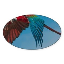 Green-winged Macaw Decal