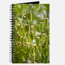 Greater quaking grass (Briza maxima) Journal