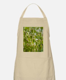 Greater quaking grass (Briza maxima) Apron