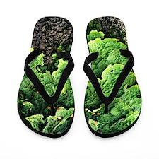 Lungwort (Lobaria pulmonaria) Flip Flops