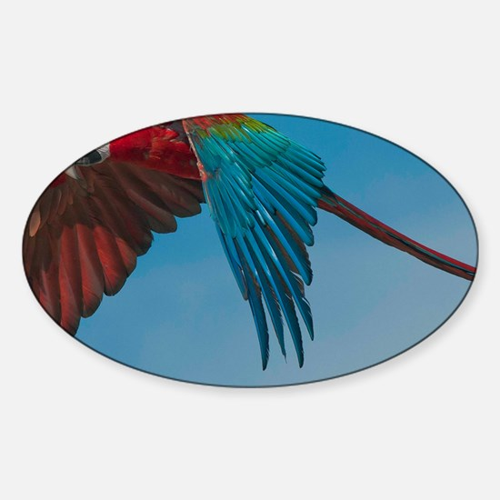 Green-winged Macaw Sticker (Oval)