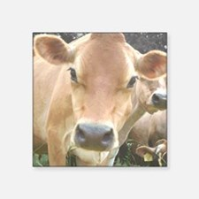 """Jersey Cow Face Square Sticker 3"""" x 3"""""""
