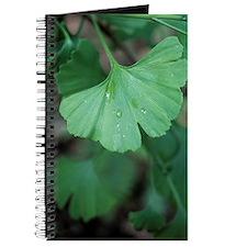 Maidenhair tree leaf (Ginkgo biloba) Journal