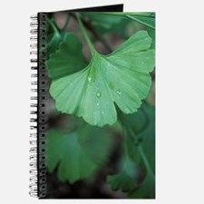 Maidenhair tree leaf (Ginkgo biloba) Journal