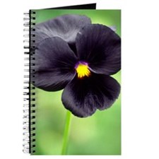Pansy (Viola wittrockiana) Journal