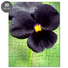 Pansy (Viola wittrockiana) Puzzle