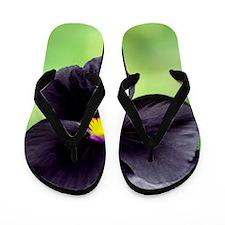 Pansy (Viola wittrockiana) Flip Flops