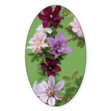 Mixed clematis flowers Decal
