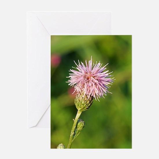 Saw-wort (Serratula tinctoria) Greeting Card