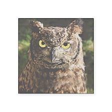 "Hypnotic Owl Square Sticker 3"" x 3"""